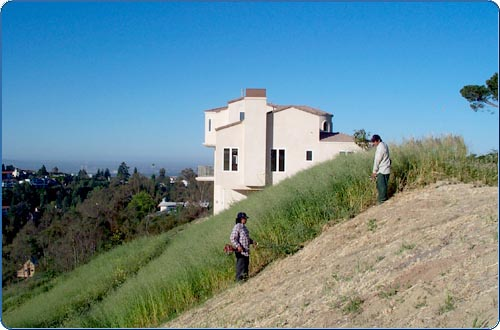 In some instances, handwork is the best weed removal method. In this scene, you see people cleaning out an area with gas-powered weed-eaters. The vegetation that is cut down is then removed and should be taken to a green waste facility.